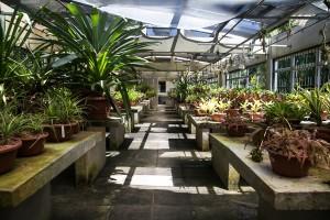15/12/2016 - PORTO ALEGRE, RS -   Jardim Botânico. Foto: Maia Rubim/Sul21