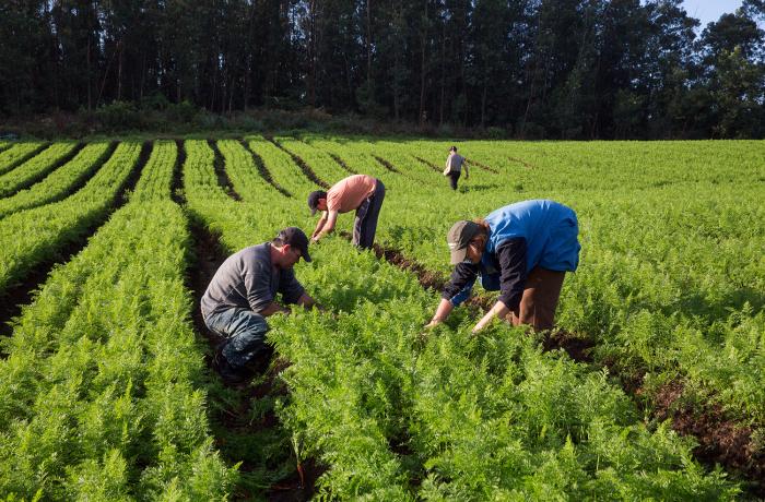 Agricultores no trabalho