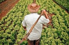 Trabalhador rural1