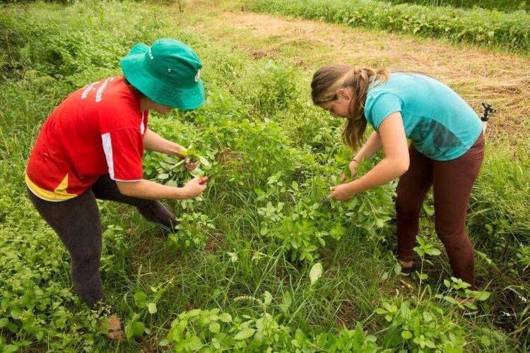 Agricultoras (2)