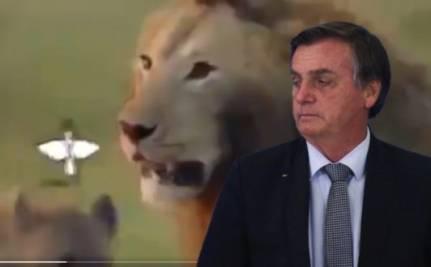 Bozo e leão