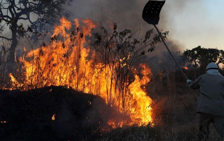 Fogo na floresta1 (2)