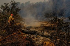 Pantanal queima