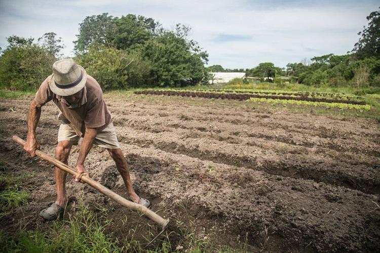 Agricultor e enxada